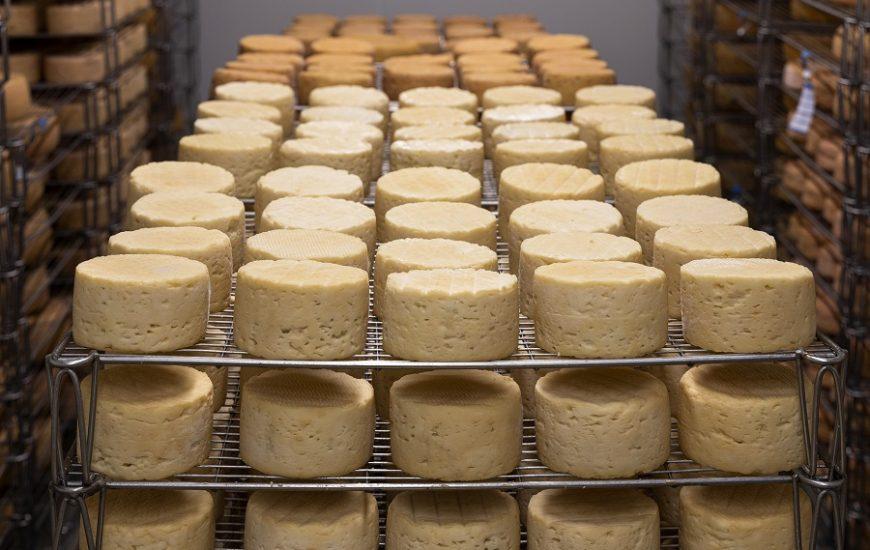 Tout savoir sur la fabrication des fromages